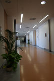 Office corridor. With closed doors Royalty Free Stock Photos