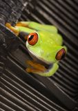 The office frog Stock Photo