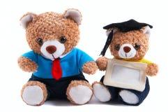 Office, graduate teddy bear Royalty Free Stock Photo