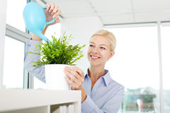Office houseplant watering Royalty Free Stock Image