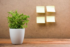 Office notes on board, copy space for ad text, plant flower, wooden grunge vintage table desk background. Stock Images