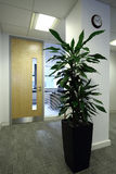 Office Plant. A plant in an office Stock Image