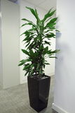 Office Plant. A plant in an office Stock Images