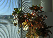 Office Plant Stock Photos