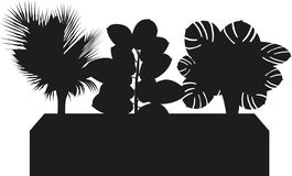 Office Plant Trio Silhouette. Vector. Silhouette Trough Planter with Rubber Plant, Majesty Palm and Cheese Plant selection for Office screen or focal point vector illustration