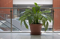 Office plants Royalty Free Stock Image