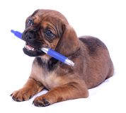 Office puppy Royalty Free Stock Photography