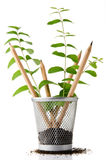 Office recycling. Pencil holder with pencils growing as plants Stock Photography