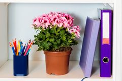 Office shelf with folder, noteook, flower and pencil holder Royalty Free Stock Images