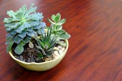 Office Succulent Plant. Get some office zen with a succulent plant arrangement Stock Photos