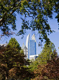 Office Towers Through Trees Stock Image