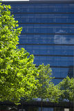 Office and Tree. A perspective of an office building and a tree Royalty Free Stock Photos