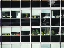 Office windows with plants Royalty Free Stock Image