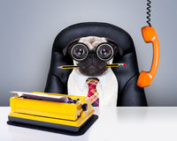 Office worker boss dog Royalty Free Stock Photo
