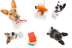 Office worker businessman couple of team dogs stock images