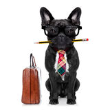 Office worker dog Royalty Free Stock Images