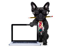 Office worker dog Royalty Free Stock Photos