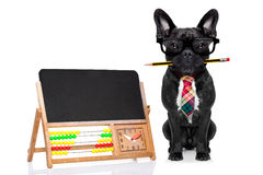 Office worker dog Stock Image