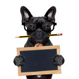 Office worker dog Stock Photography
