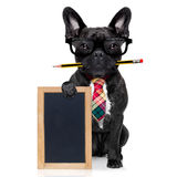 Office worker dog Royalty Free Stock Image