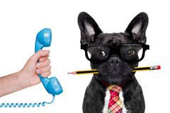Office worker dog Stock Images