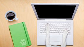 Office worker dog  with laptop pc computer on desk table Royalty Free Stock Photos