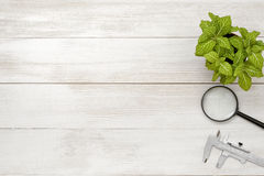 Office workplace with green houseplant, calipers and magnifier Stock Photography