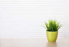 Office workplace with potted plant. On wood desk table in front of window with blinds Stock Images