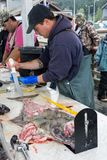 An official marine inspector measures a halibut fish at the cleaning station royalty free stock photography