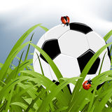 Official world cup 2010. Ball between grass and two ladybugs around it royalty free illustration