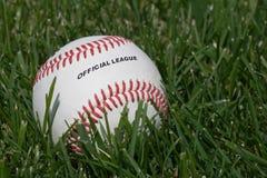 Officiell baseball på gräset Arkivbild