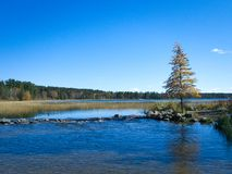 Officiell start av Mississippiet River på den sjöItasca delstatsparken, Minnesota arkivbilder