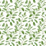 Officinalis de Salvia ou sábio do jardim Teste padrão de superfície sem emenda do ramo prudente isolado no fundo branco botanical ilustração royalty free