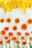 Officinalis van kruidcalendula op een lichte achtergrond met gele lelies stock foto