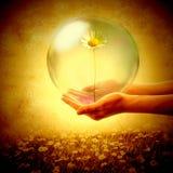 Offre d'une marguerite dans une bulle, carte d'amour Photos stock
