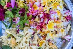 Offres aux dieux dans Bali avec des fleurs Île tropicale exotique de Bali, Indonésie image stock