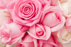 Offrez aux roses roses le bouquet Images stock