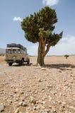 offroad medel 4wd på stenigt spår med det enkla trädet, Cirque de Jaffar, kartbokberg, Marocko Arkivbild