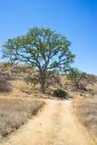 Offroad slinga i Kalifornien kullar Royaltyfria Bilder