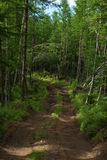 Offroad tracks in a deep wild forest. Kamchatka, Russia royalty free stock photo