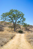 Offroad Trail in California Hills Royalty Free Stock Images