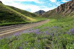 Offroad in Valley of flowers Mongolia Royalty Free Stock Images