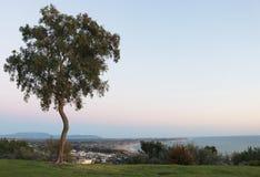 Offset- träd som förbiser kustlinjen Arkivfoto