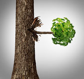 Offshoot Concept. As a lateral move business metaphor as a tree trunk with a sideways branch and leaves bursting out horizontally as an icon for branching out Stock Images