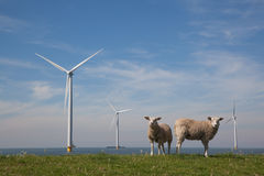 Offshore Windturbines in the IJsselmeer, The Netherlands with st. Anding sheep on the grass dike Royalty Free Stock Photography