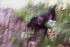 Offuscando l'immagine di un'erba e dei cespugli illuminati da sole Fotografia Stock
