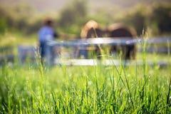 Offuschi i cavalli nel fondo e le erbe con la rugiada di mattina a priorità alta, prato verde per i cavalli con una stalla Fotografie Stock Libere da Diritti