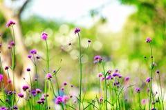 Offuschi l'estate verde variopinta della natura dei campi del fuoco dell'inverno dei campi dell'albero del giardino all'aperto ro Fotografia Stock