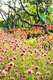 Offuschi l'estate verde variopinta della natura dei campi del fuoco dell'inverno dei campi dell'albero del giardino all'aperto ro Immagini Stock