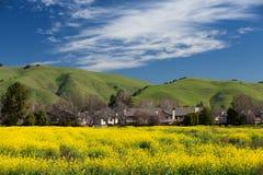 Offuschi la casa ed il seme di ravizzone giallo del campo in fioritura in primavera Immagine Stock Libera da Diritti